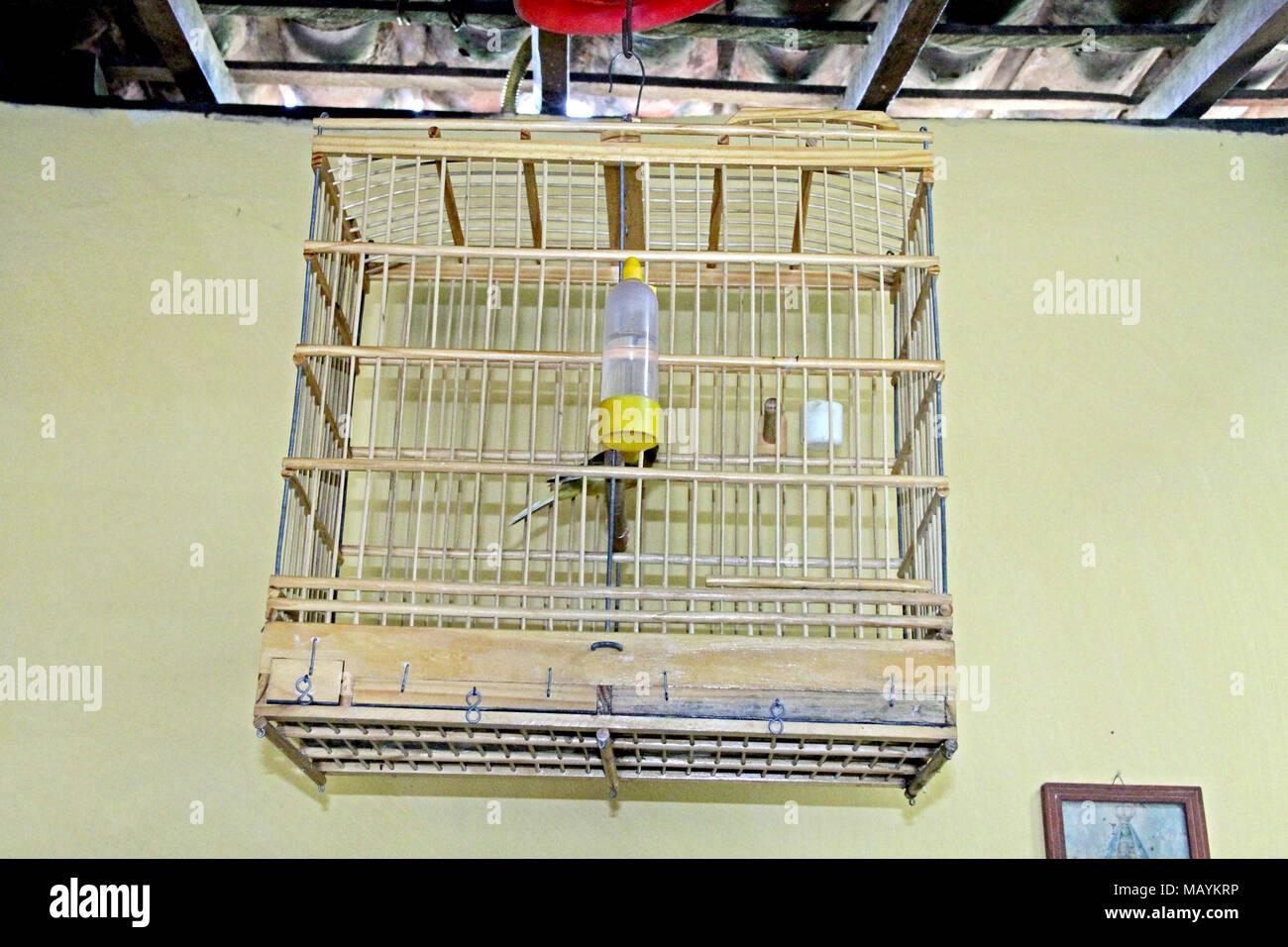 Birdcage Home Interior,Paraiba, Brazil   Stock Image