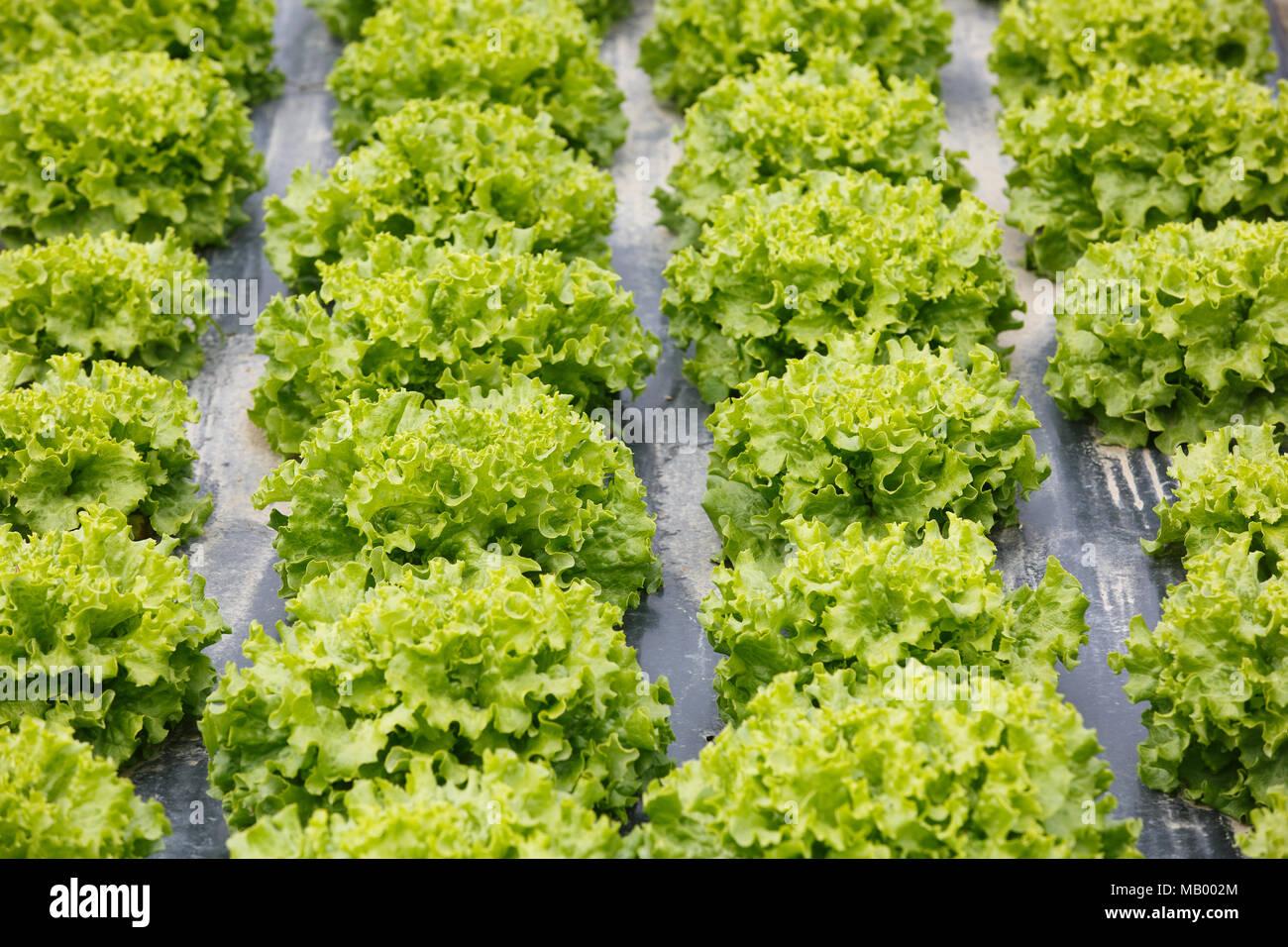 Plastic Mulch Stock Photos Amp Plastic Mulch Stock Images