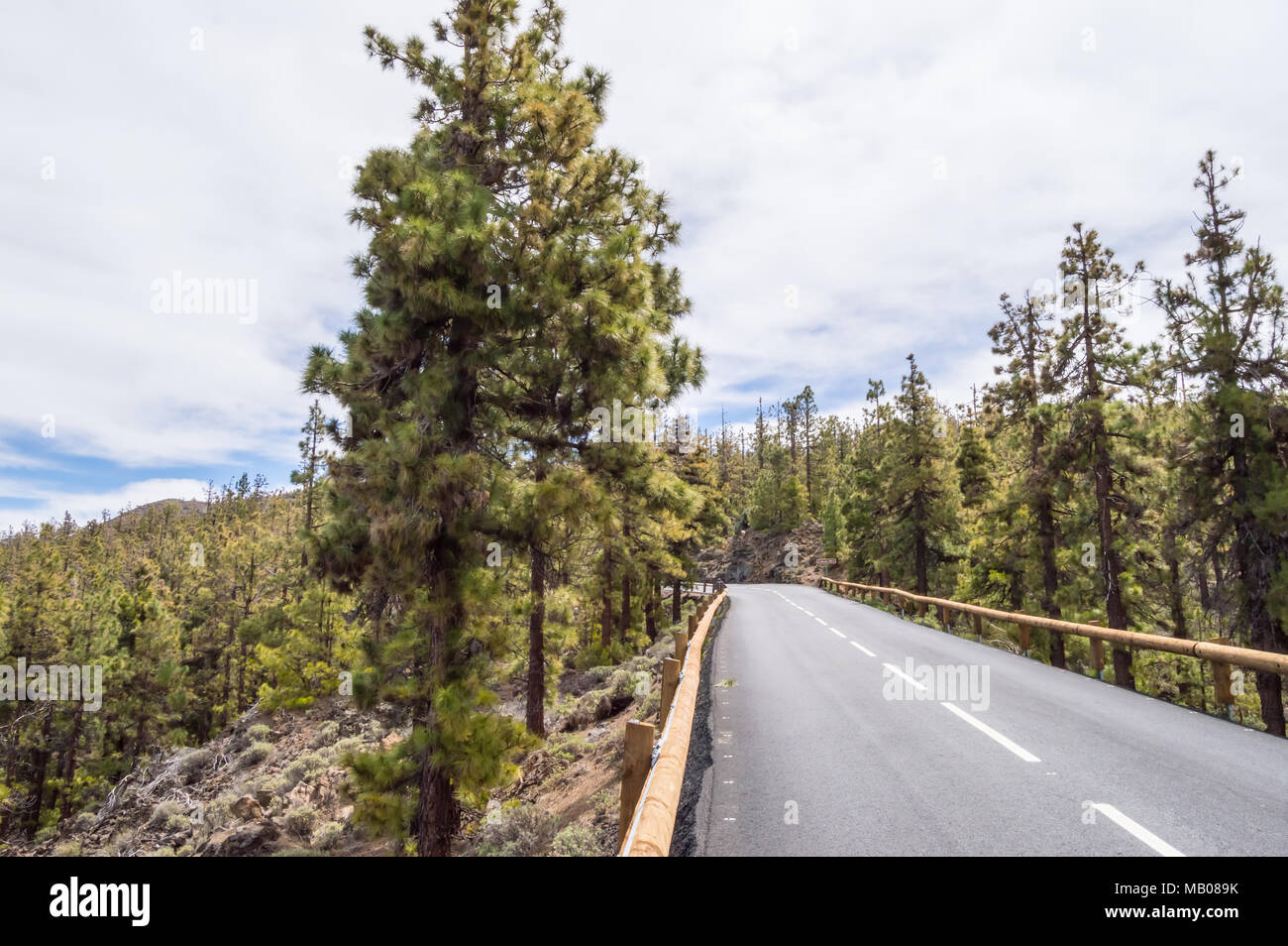 Road in tarmac in the middle of a pine forest on the island of Tenerife in Spain - Stock Image