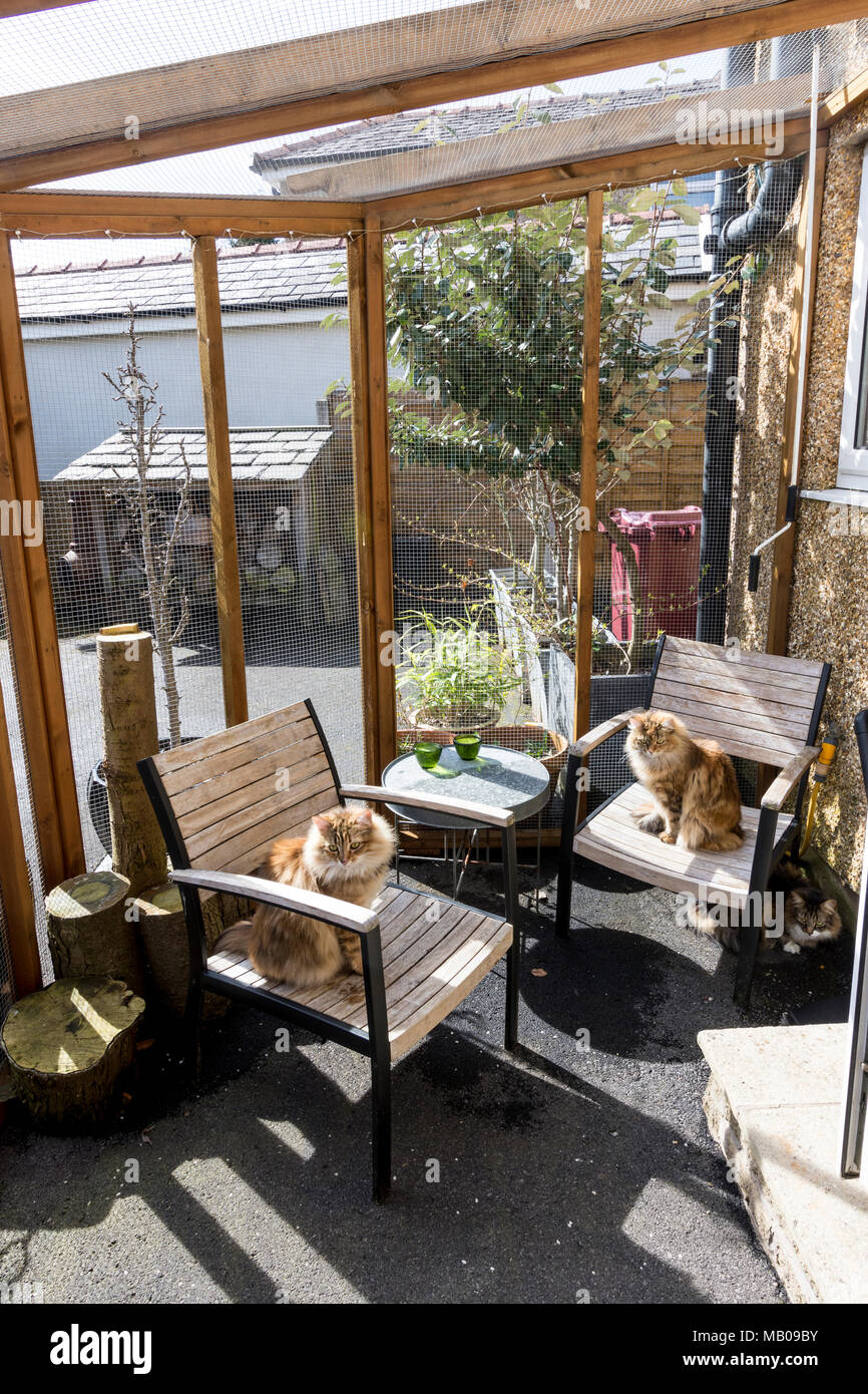 Catio, A Cage Like Structure Attached To The Side Of A House To Enable Cats  To Live Outdoors Safe From Roaming Or Predators.