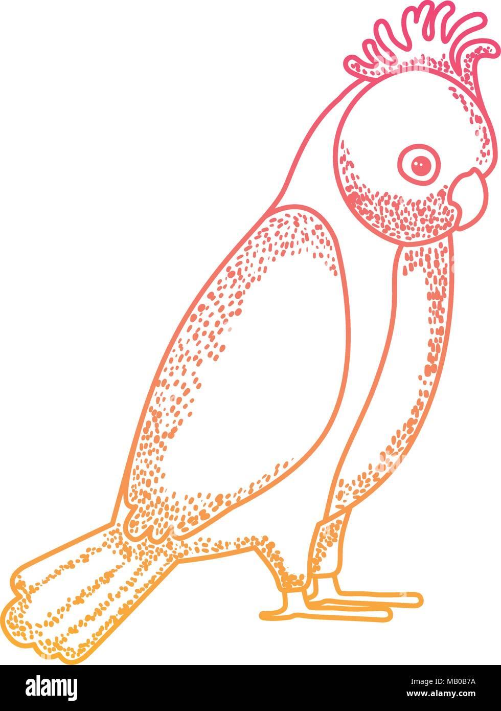 gang gang cockatoo australian bird - Stock Vector