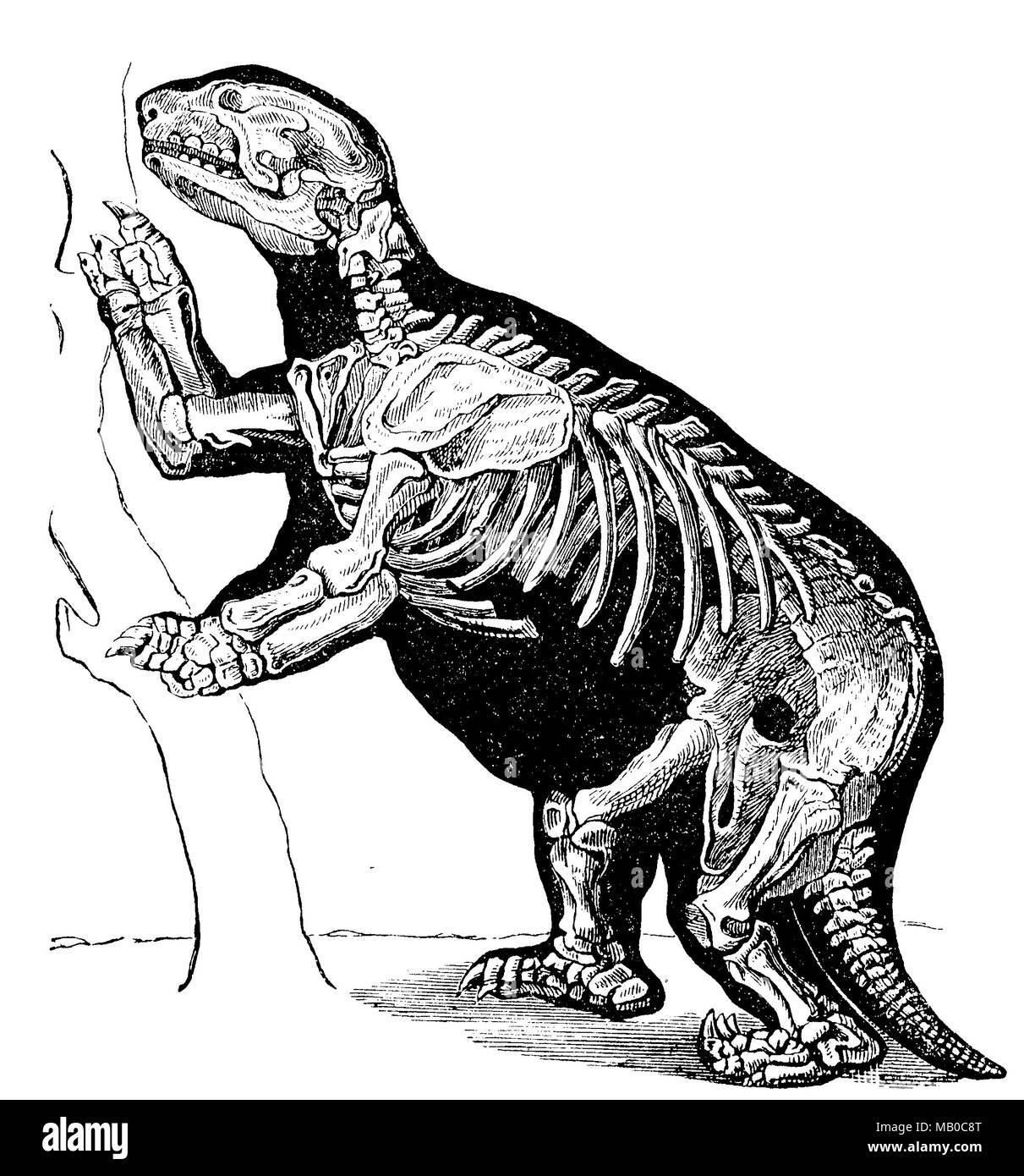 Riesenfaultier, Skelett eines Megatherium americanum, ausgestorben. giant sloth, skeleton of a megatherium americanum, extinct, digital improved reproduction of an original print from the year 1895 - Stock Image
