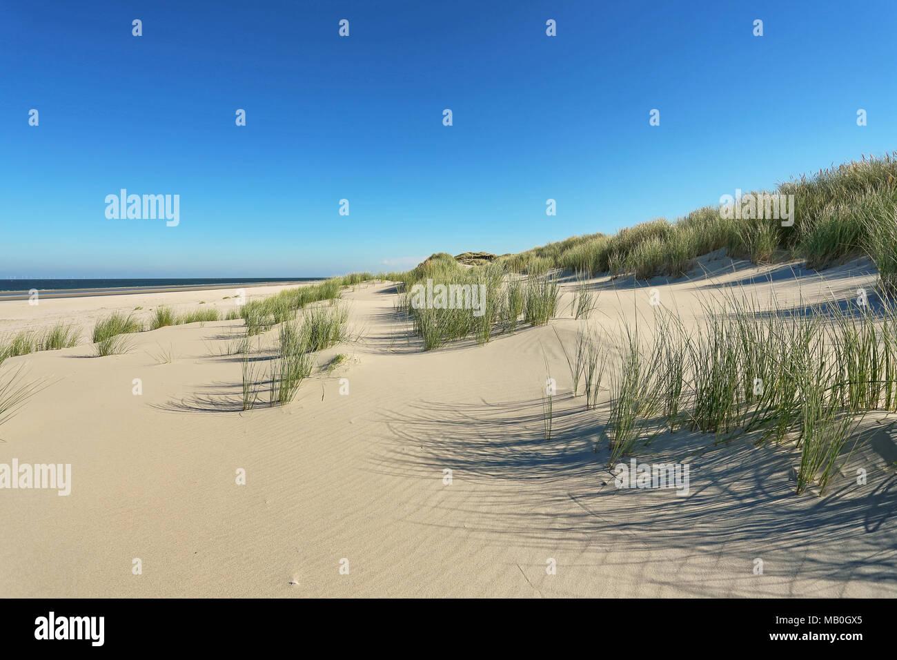 Coastal Dunes with Marram - Stock Image