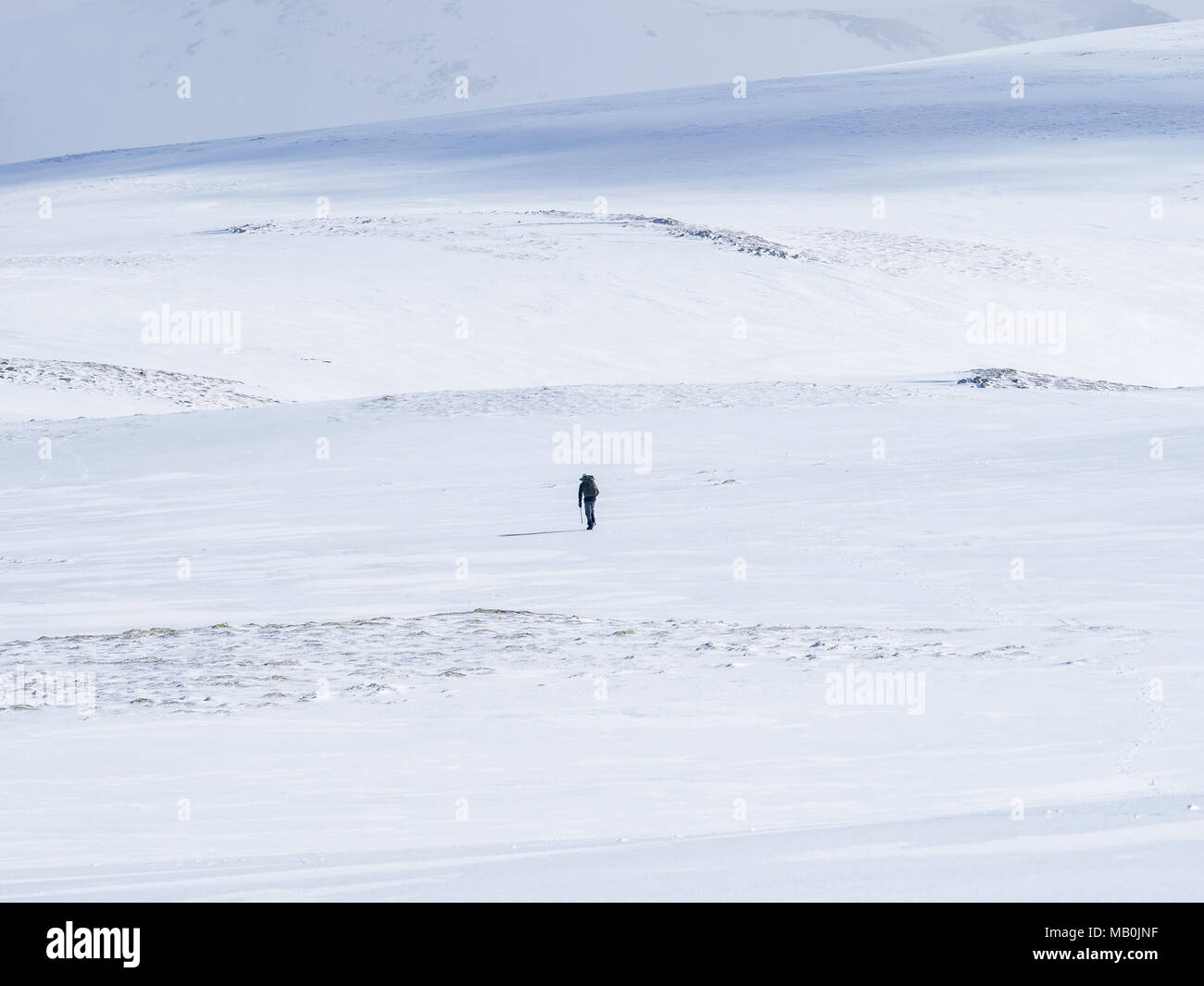 A lone walker crossing a large snowfield in the Cairngorm National Park, Scotland near the Glenshee ski Centre - Stock Image