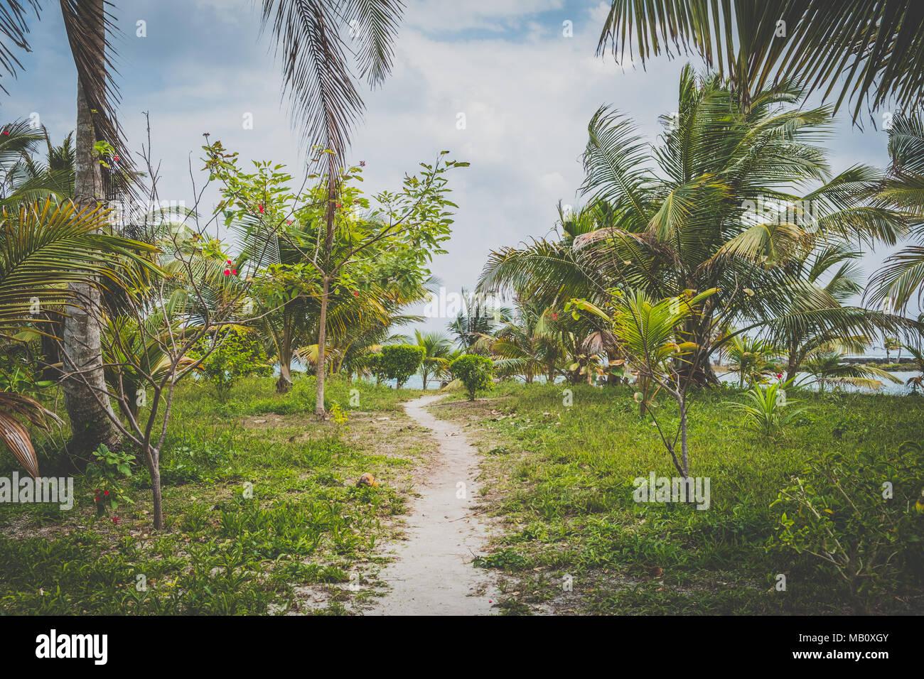 walking path, dirt trail, walkway through tropical garden  landscape, - Stock Image