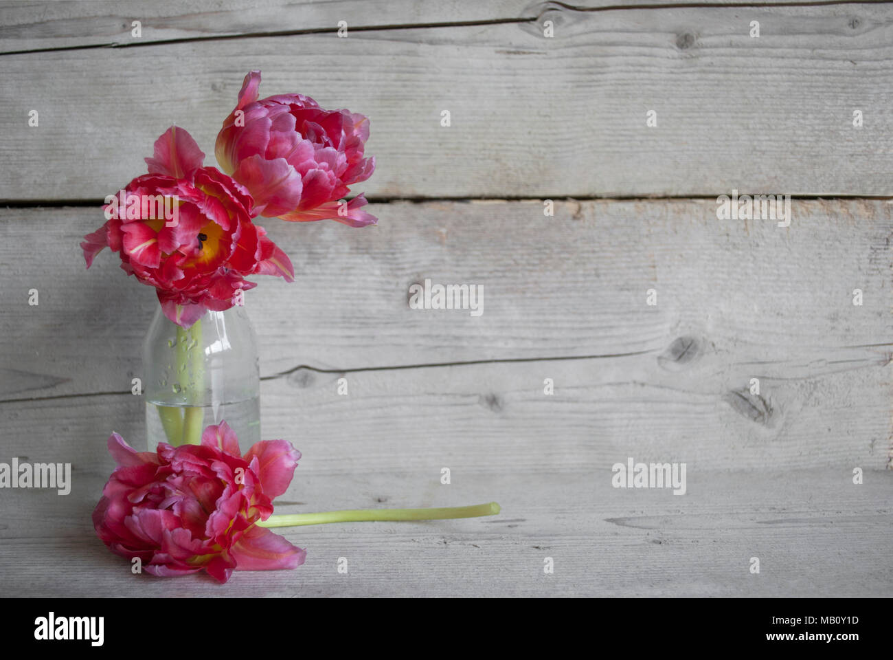 Pink Dutch peony tulips in glass bottle, on old wooden background with petalsStock Photo