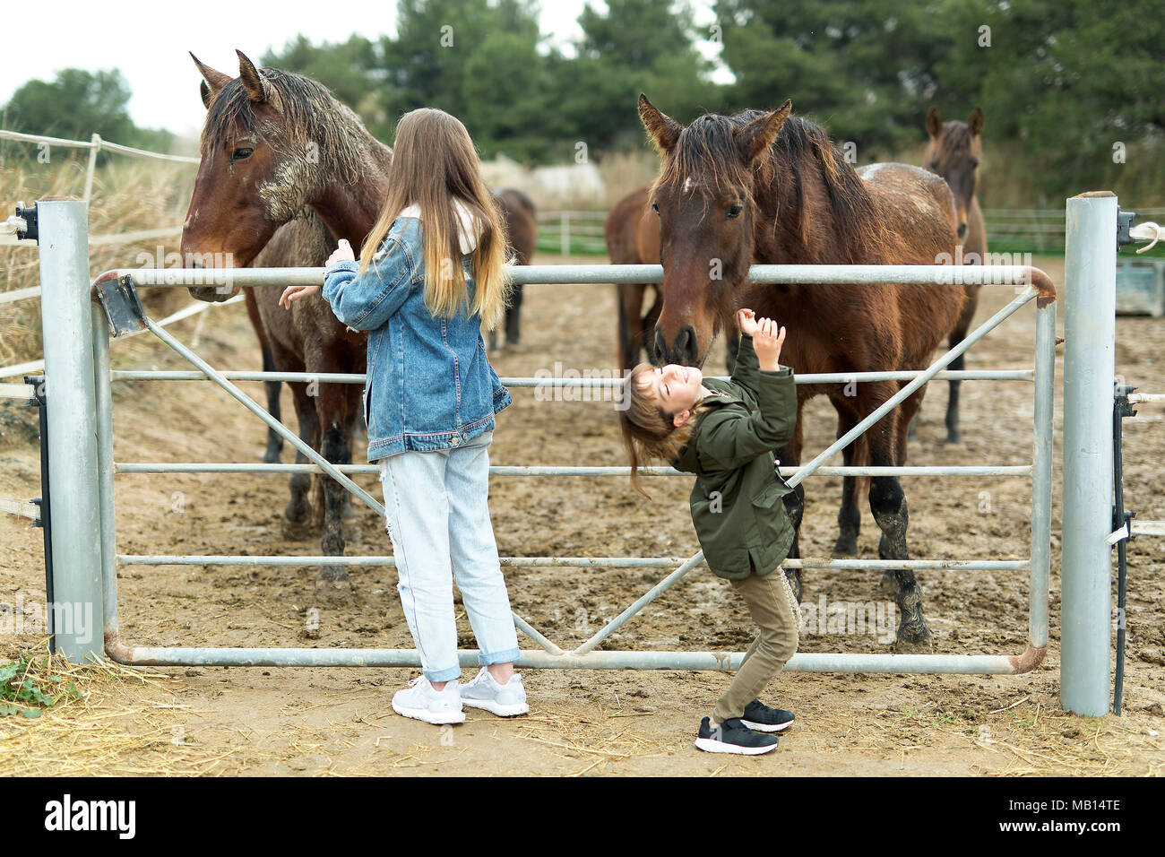 Horse giving a kiss to a 10-year-old girl in a shelter in Rojales, province of Alicante in Spain. - Stock Image
