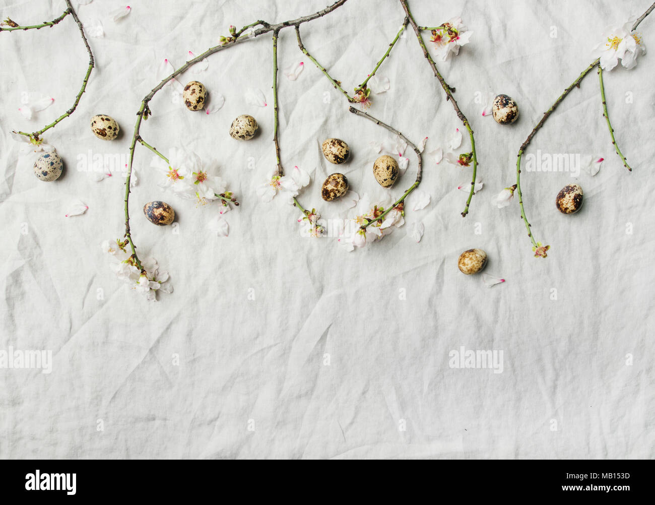 Easter holiday background. Flat-lay of tender Spring almond blossom flowers on branches and quail eggs over light grey linen cloth, top view, copy spa - Stock Image