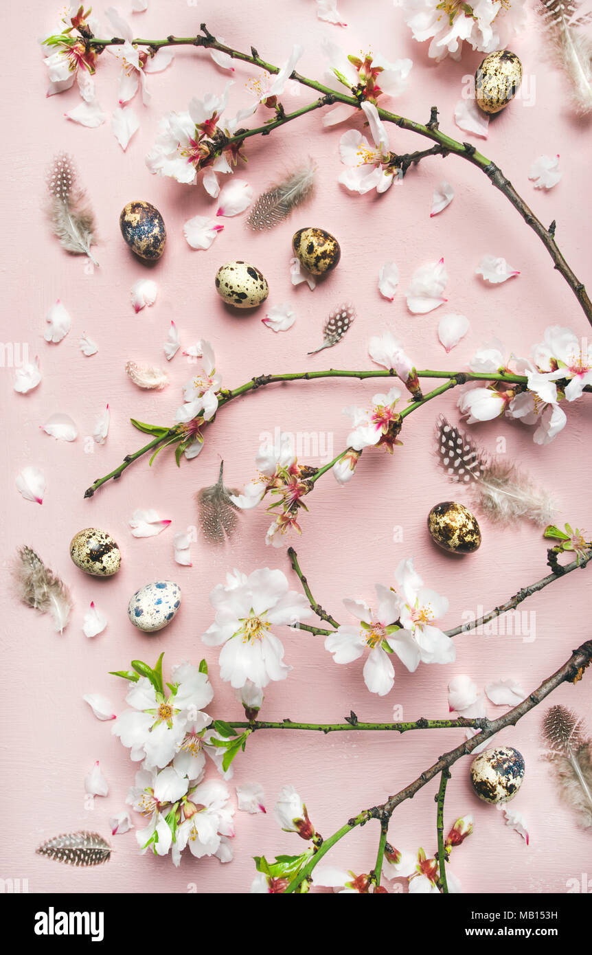 Easter holiday background. Flat-lay of tender Spring almond blossom flowers on branches, feathers, quail eggs over light pink background, top view, ve - Stock Image