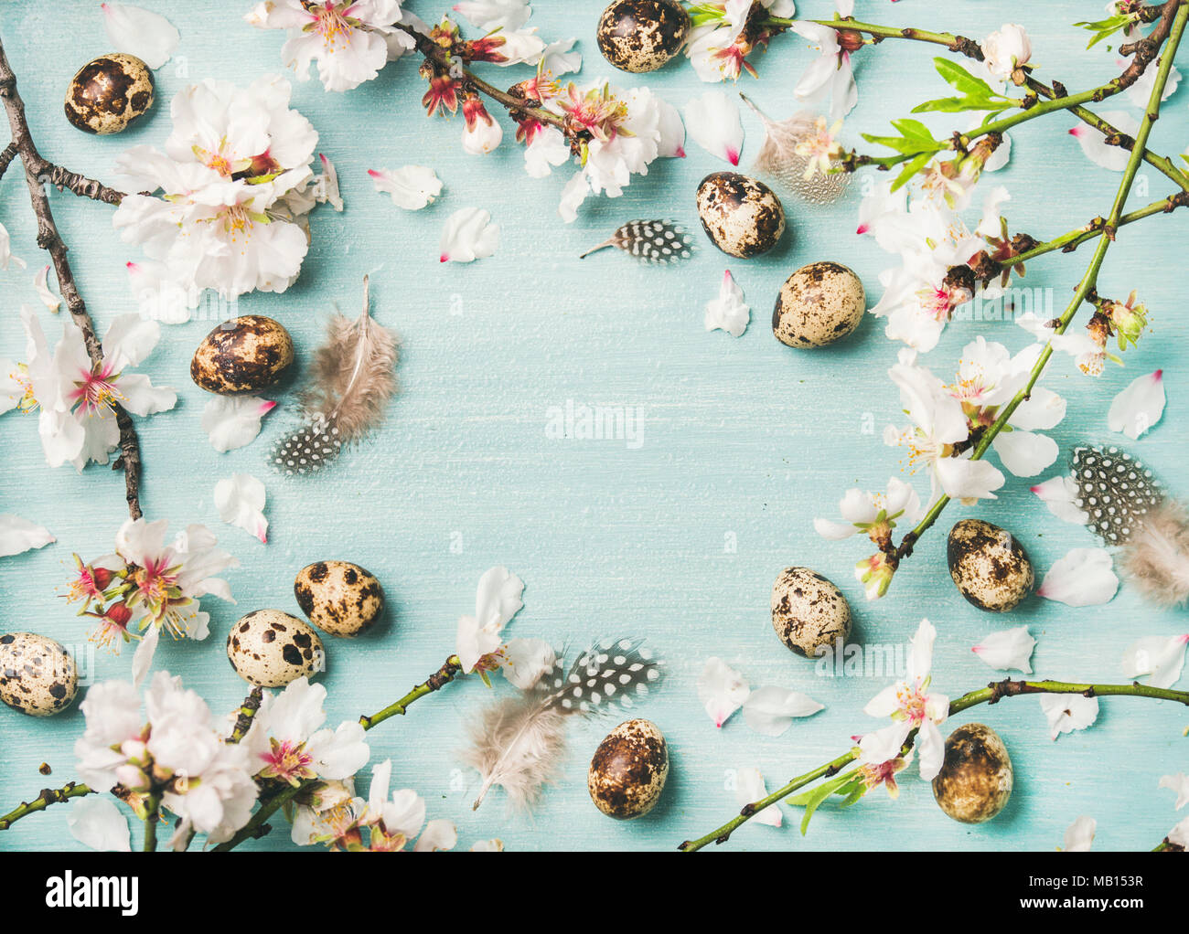 Easter holiday background. Flat-lay of tender Spring almond blossom flowers on branches, birds feathers and quail eggs over light blue background, top - Stock Image