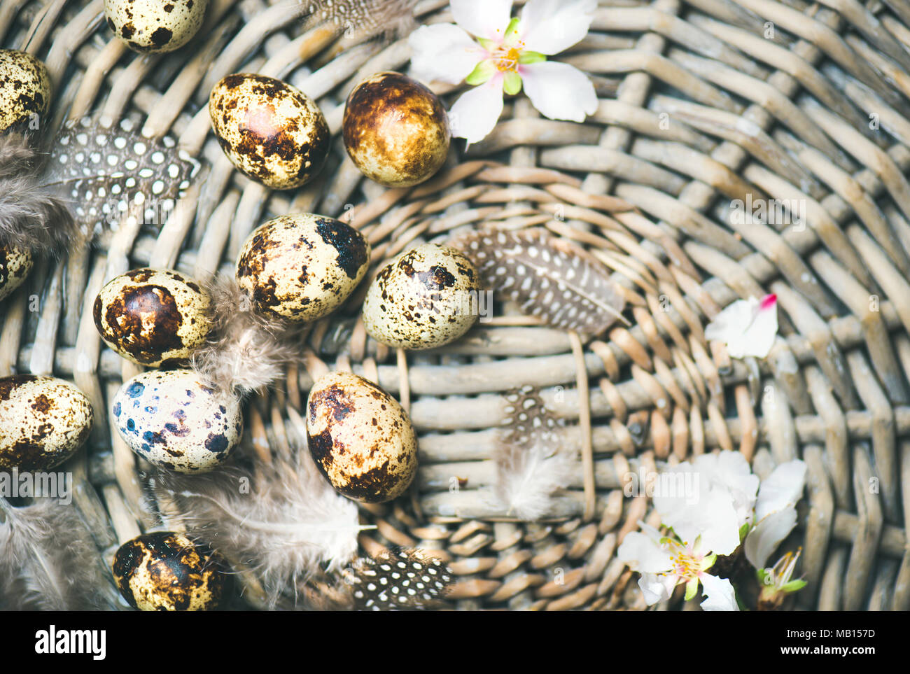 Easter holiday background. Flat-lay of natural colored quail eggs, tender almond blossom flowers, feather in basket, top view, copy space, horizontal  - Stock Image