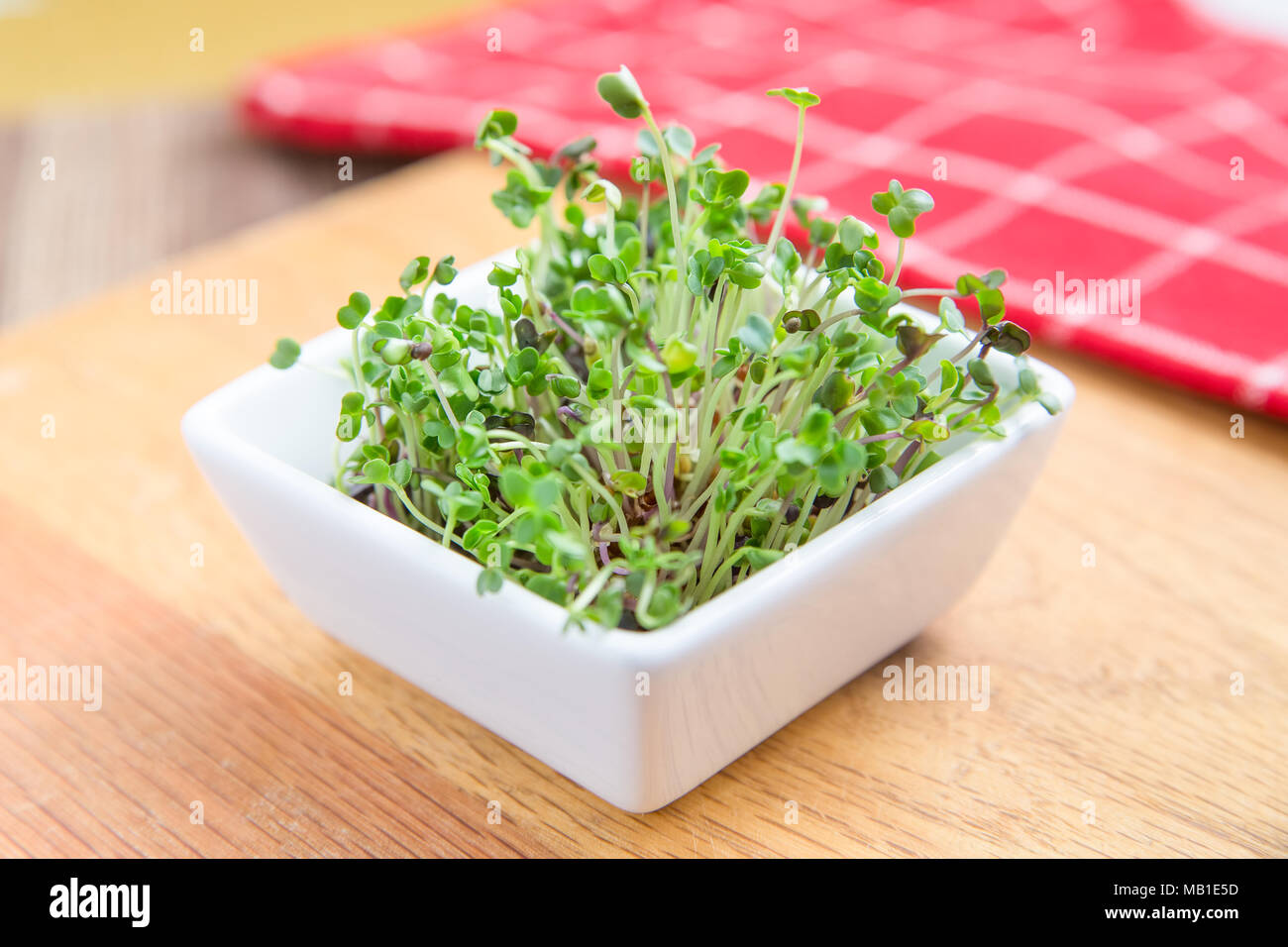 Dish of fresh microgreen sprouts on a wooden kitchen counter with a red napkin in background - Stock Image