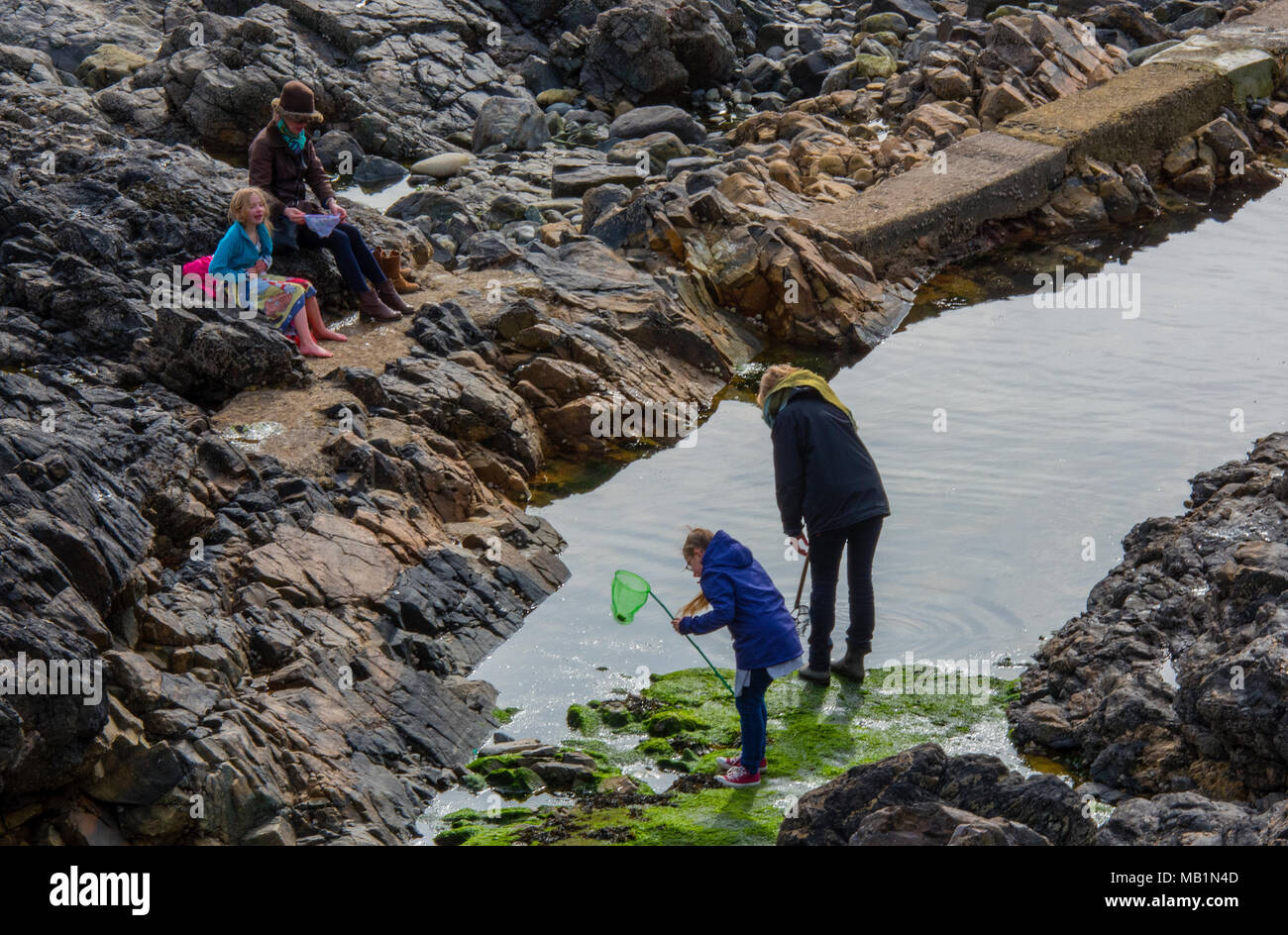 Mums and kids or children fishing in the rock pools or rockpooling at st Ives in west cornwall. Playing with children parents in pools on the rocks. Stock Photo