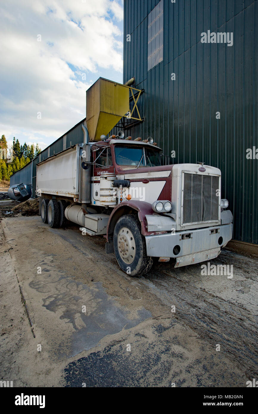 A Peterbilt twin axle truck used to haul chafe, under a chute at General Feed & Grain Inc., grain mill, in Bonners Ferry, Idaho, USA - Stock Image