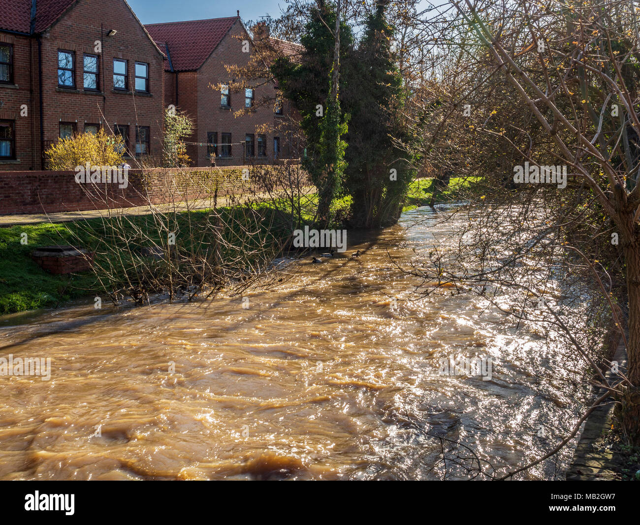 High water level at Cod Beck, Thirsk, North Yorkshire, UK. - Stock Image