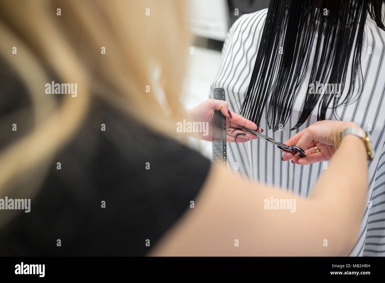 Back portrait of hairdresser cutting customer hair ends - Stock Image