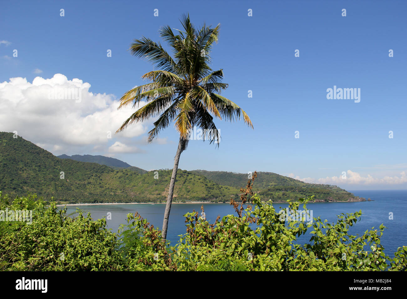 An isolated coconut tree along the Lombok Strait in Indonesia - Stock Image