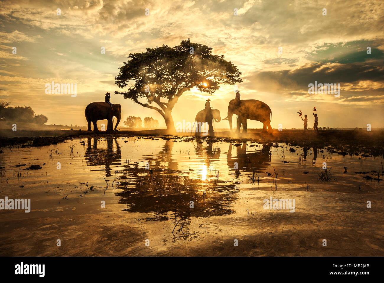 elephants under tree stock photos elephants under tree. Black Bedroom Furniture Sets. Home Design Ideas
