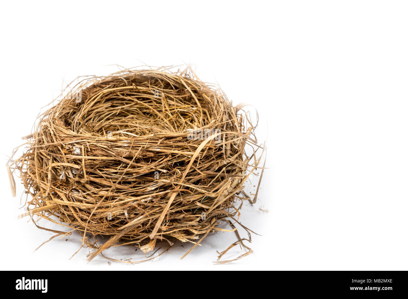 Horizontal side view of an empty bird's nest in the lower left hand corner of the shot.  White background.  Copy space. - Stock Image