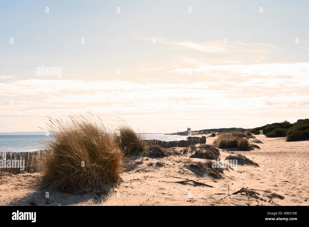 Beach scene with beach dunes and copy space. Es Cavallet, Ibiza Island. Sunset scene. - Stock Image