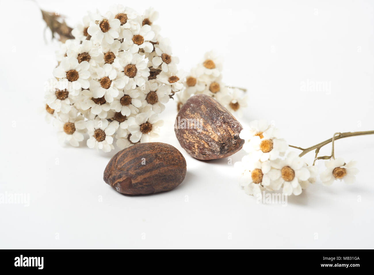 Shea butter nuts on a white background with flowers. Copy space Stock Photo