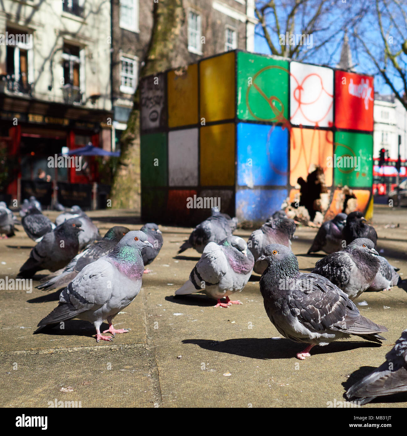 Pigeons in bright summer sun gathered in front of brightly coloured block sculpture which is partly broken and used as a nest, London 2018 - Stock Image
