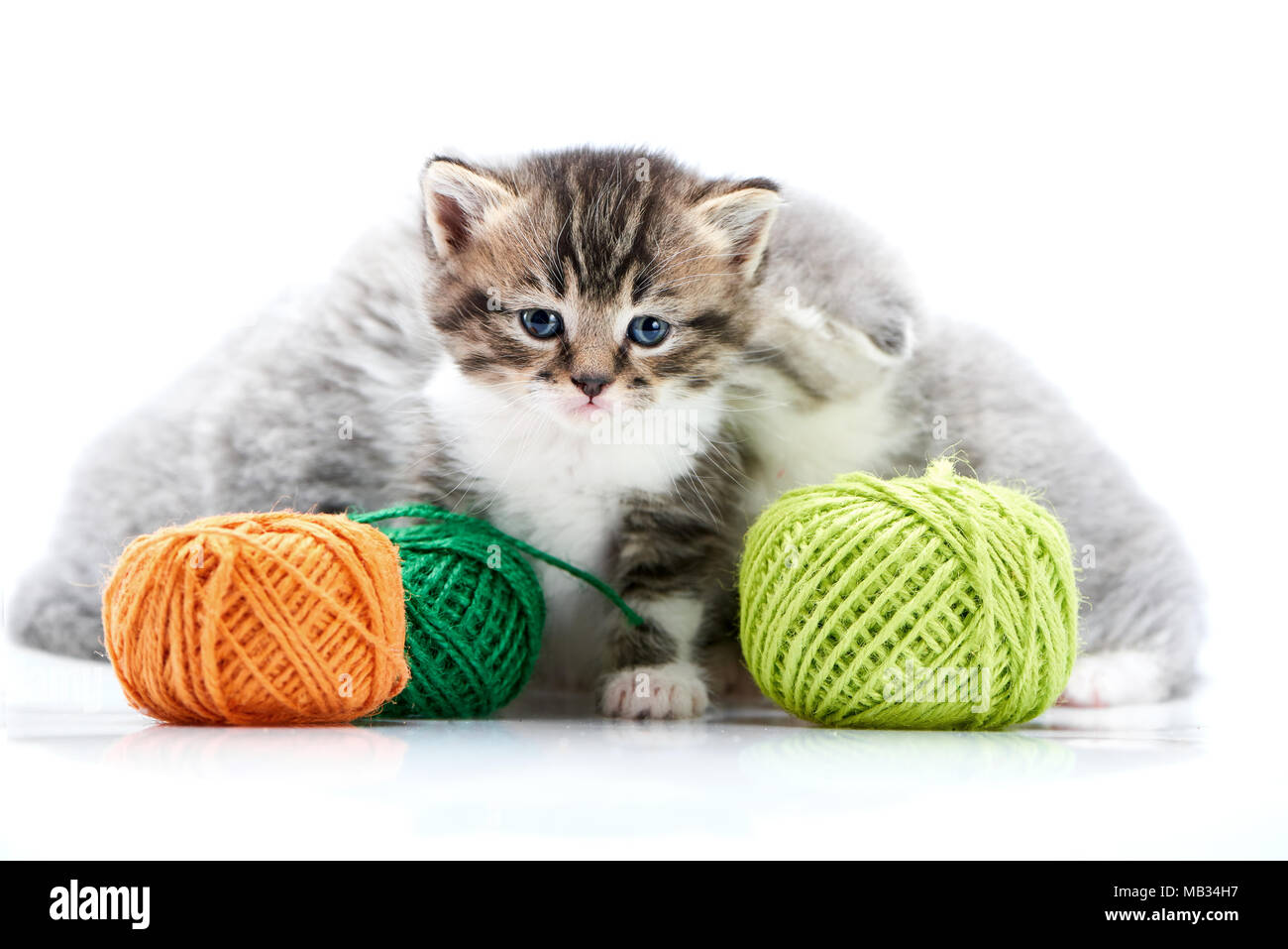 Grey fluffy cute kitties and one brown striped adorable kitten are playing with orange and green yarn balls in white photo studio. Wool gray funny amusing playful curious funny cats happiness exploring - Stock Image