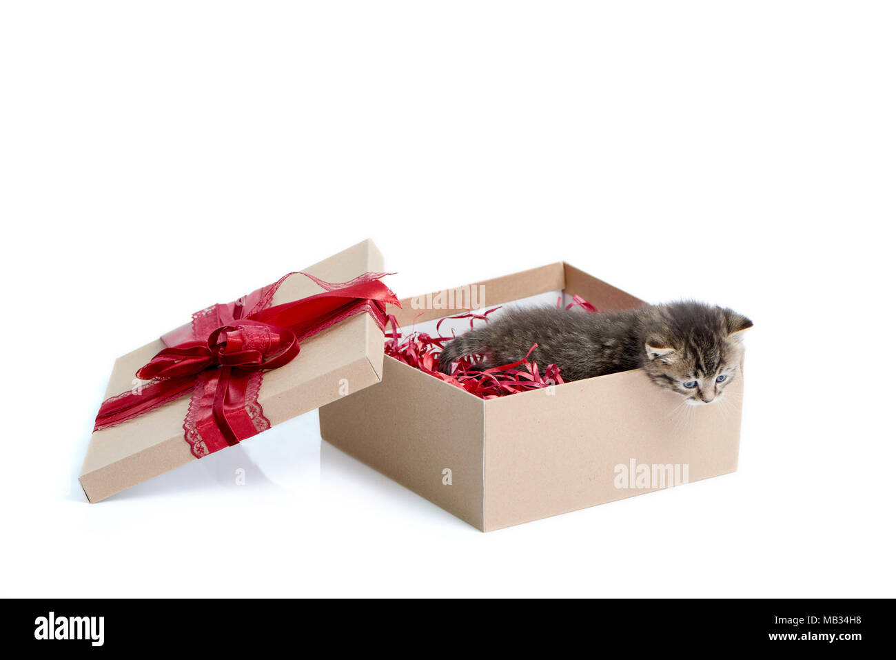 Cute present. Little brown striped funny kitten looking out of birthday box with big red bow on top. Cuteness happiness small fluffy adorable charming playful kitty valentine decoration white Stock Photo