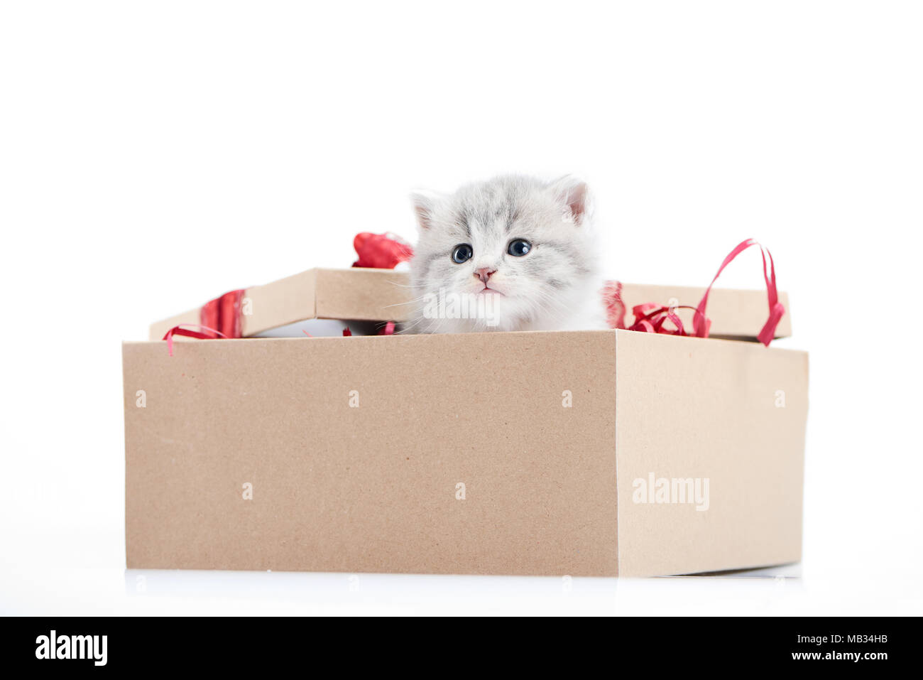 Little Adorable Fluffy Kitten Looking Out Of Decorated Cardboard Box Being Present For Special Occasion Small Cute Pretty Funny Playful Curious Cat