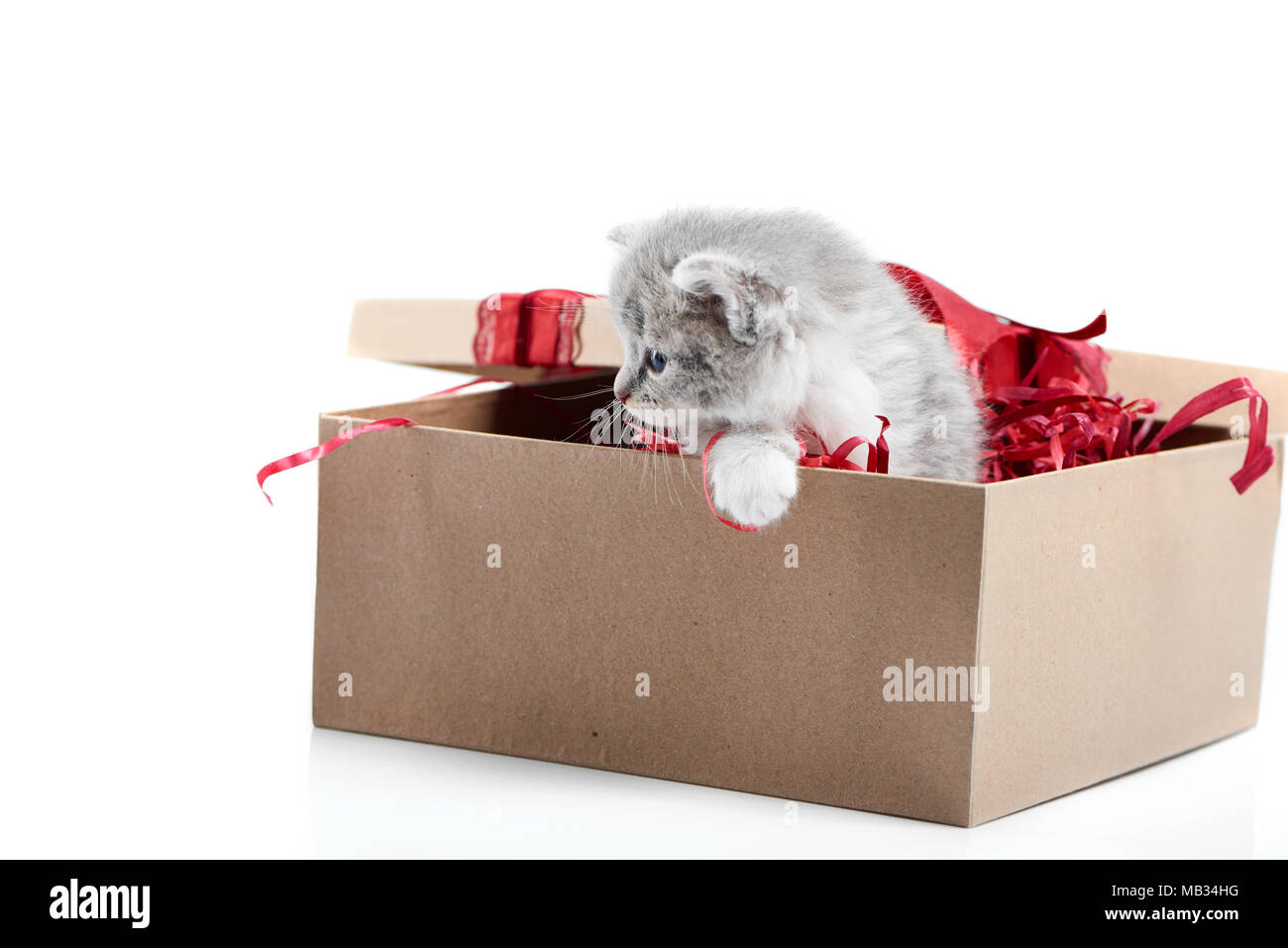 Small Adorable Grey Kitten Looking To Side While Sitting In Decorated Cardboard Box Being Birthday Present Little Cute Funny Curious Playful Cat Valentine
