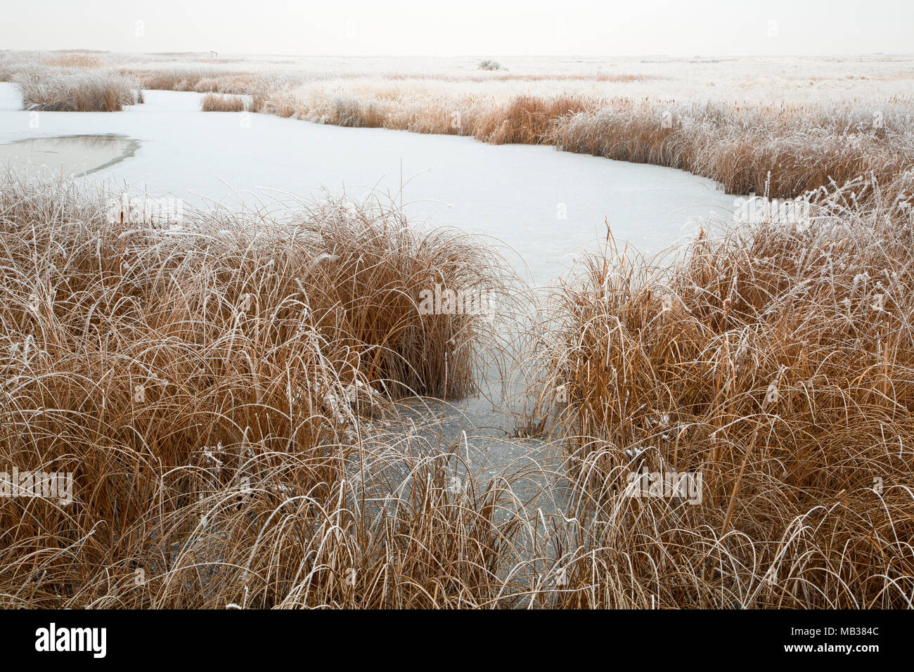 Visitor Center pond with ice, Bear River Migratory Bird Refuge, Utah - Stock Image