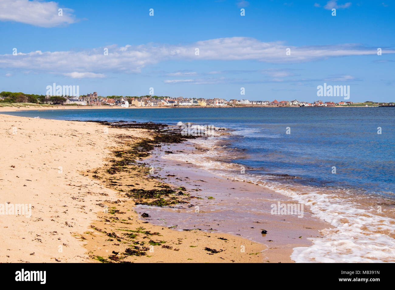 Seaweed at high tide mark on sandy beach on Firth of Forth coast. Elie and Earlsferry, East Neuk of Fife, Fife, Scotland, UK, Britain Stock Photo