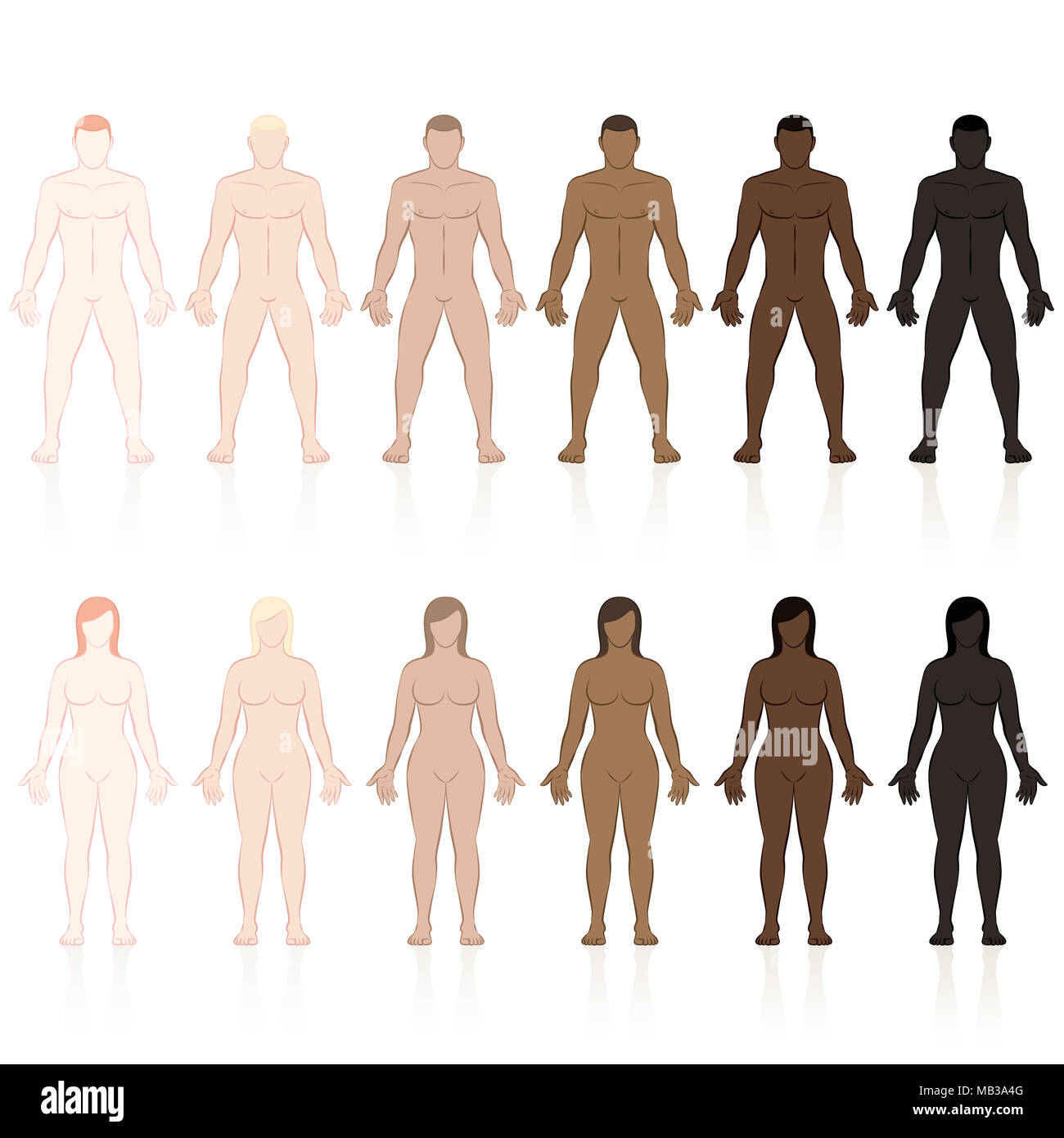 Male and female bodies with different skin types. Very fair, fair, medium, olive, brown and black. Isolated vector illustration on white background. - Stock Image