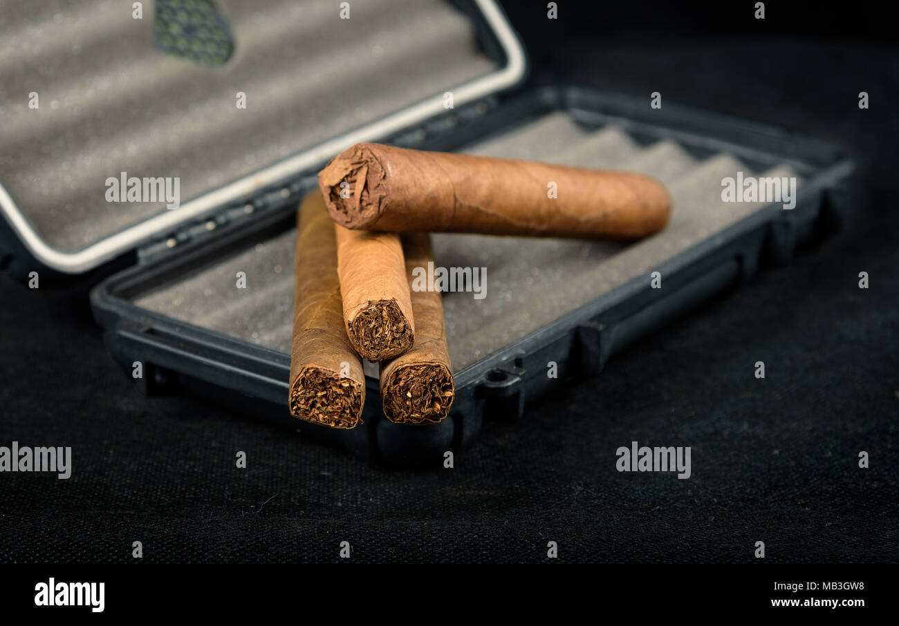 Cigars on top of a black travel humidor. Rich smelling and textures of tobacco leaves - Stock Image