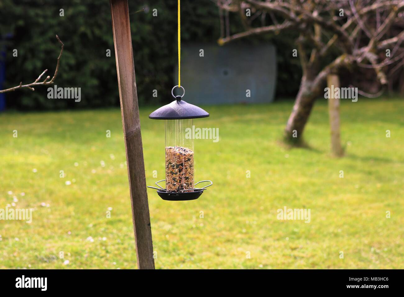 Hanging bird feeder with seed in garden with blurred background - Stock Image