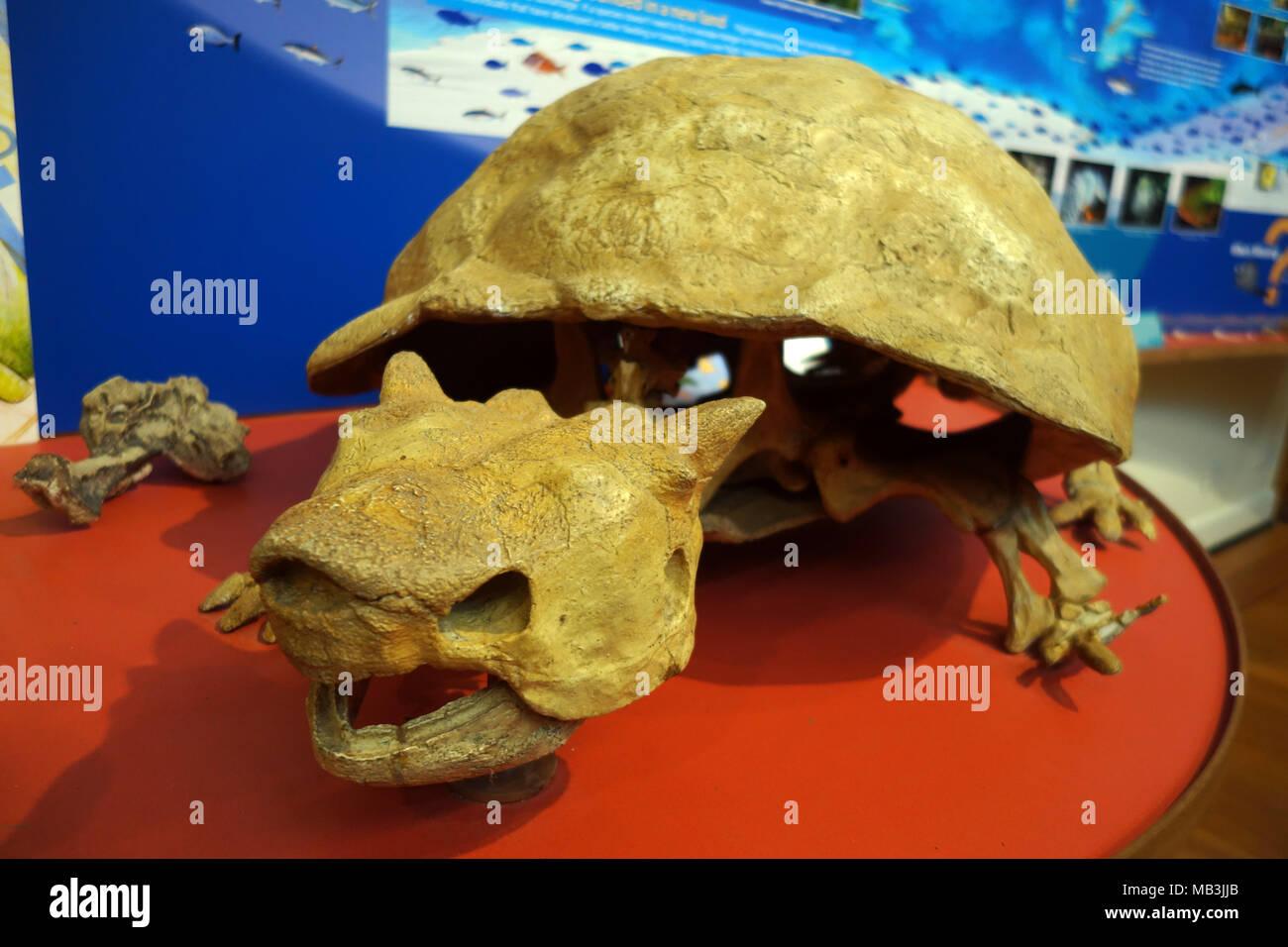 turtle skeleton stock photos amp turtle skeleton stock