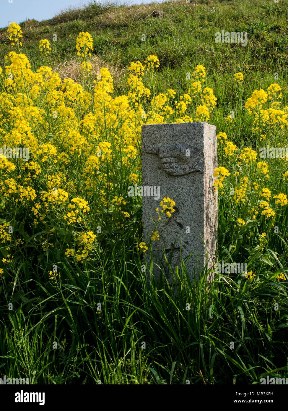 Stone guide post,  route marker, in a field of flowers, on Route 56 between Uwa and Ozu, 88 Temple Shikoku pilgrimage, Shikoku, Japan - Stock Image