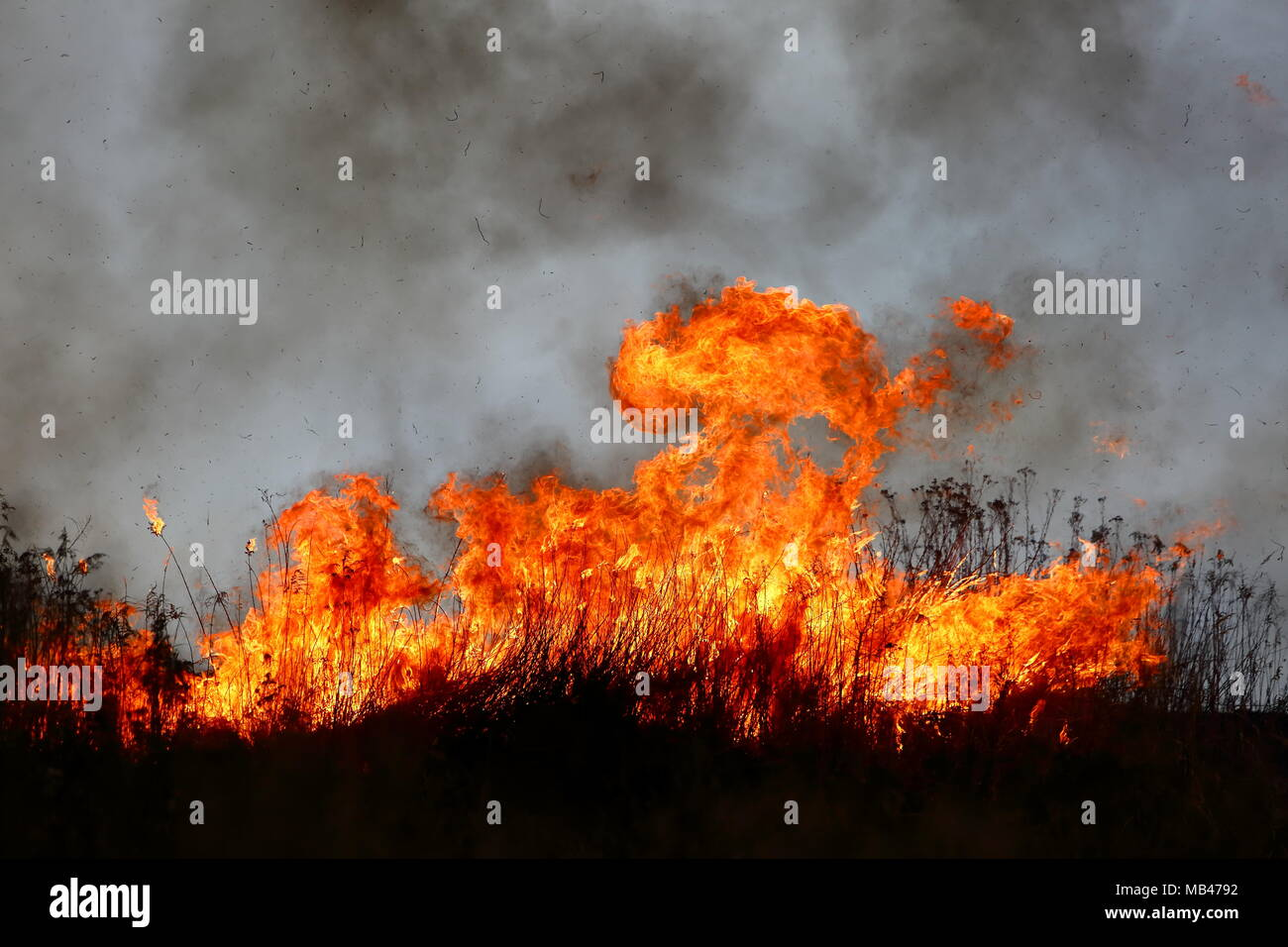 The fire of large areas of dry grass in the meadow can turn into a terrible tragedy as if it got close to residential houses. - Stock Image