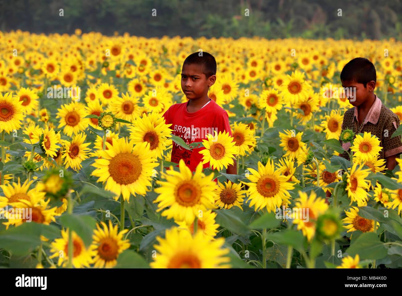 Noakhali, Bangladesh - April 06, 2018: Bangladeshi children play
