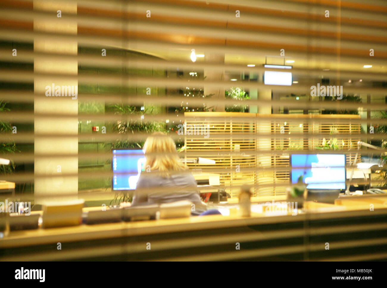 Woman backside working at the computer in the office seen from outside a venetian curtain - Stock Image
