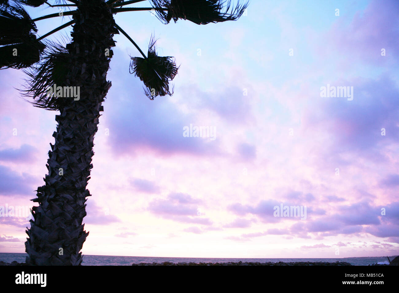 Palm tree Sunset at sea with violet clouds - Stock Image