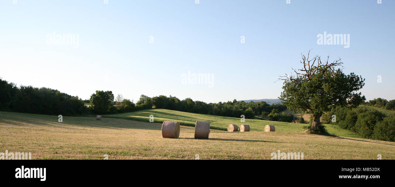 Countryside landscape with round staw bails and large tree - Stock Image