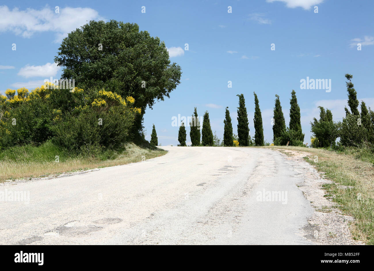 Small mountain road with cypress trees - Stock Image