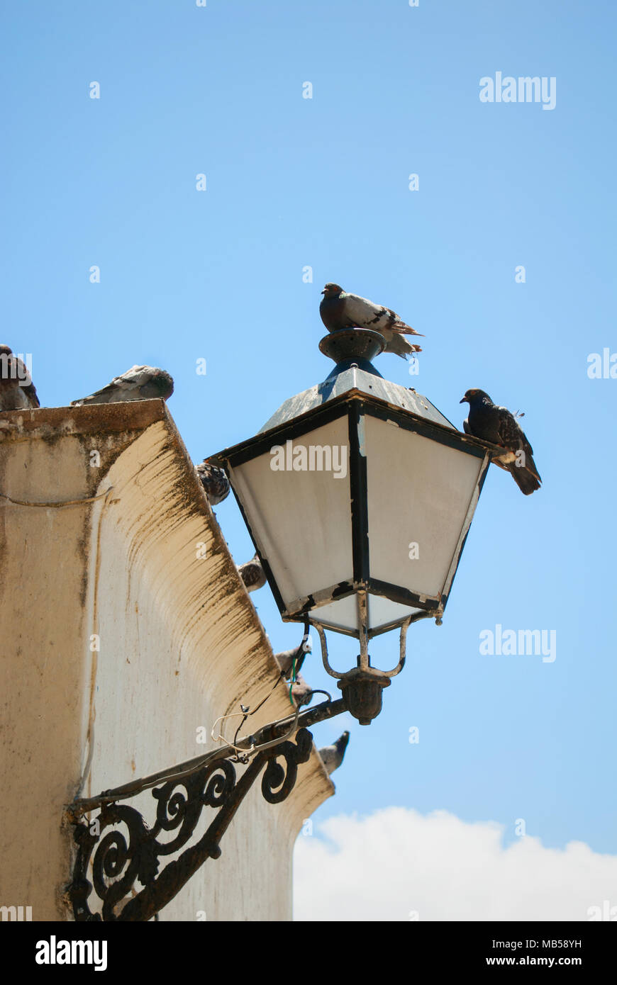 A group of pigeons perched on a building and old light fixture. - Stock Image