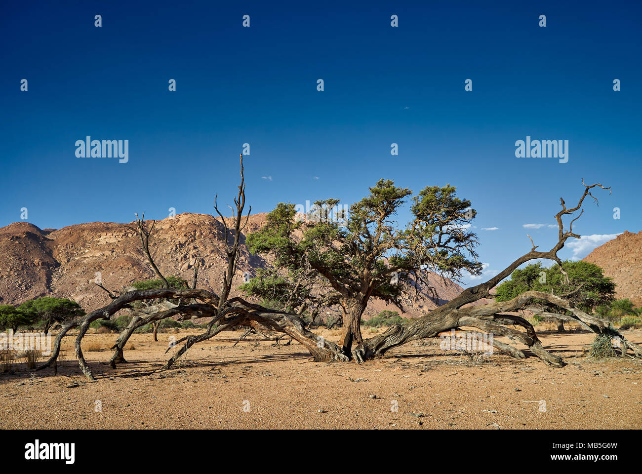 tree in tranquil landscape on Farm Namtib, Tiras mountains, Namibia, Africa Stock Photo