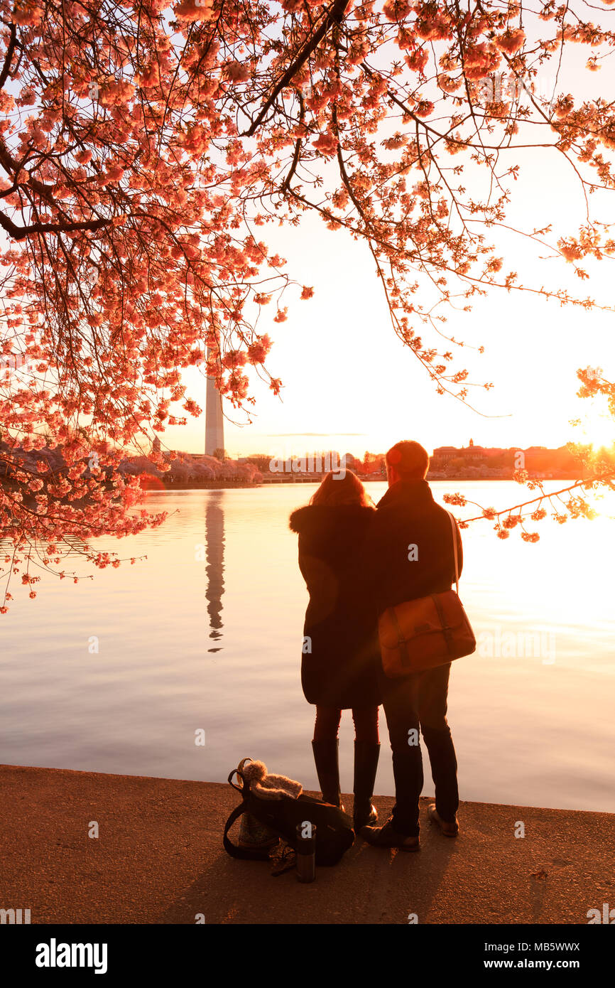 A couple watching sunrise during cherry blossom bloom - Stock Image