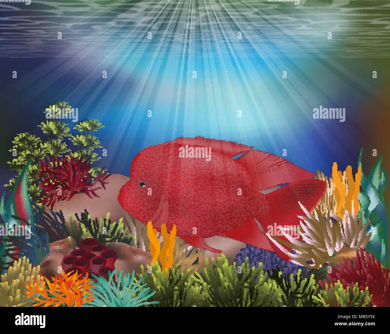 Parrotfish Illustration Stock Photos & Parrotfish Illustration Stock ...
