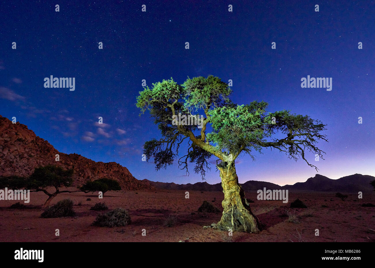 night shot of a tree with moonlight under sky with stars in tranquil landscape on Farm Namtib, Tiras mountains, Namibia, Africa Stock Photo
