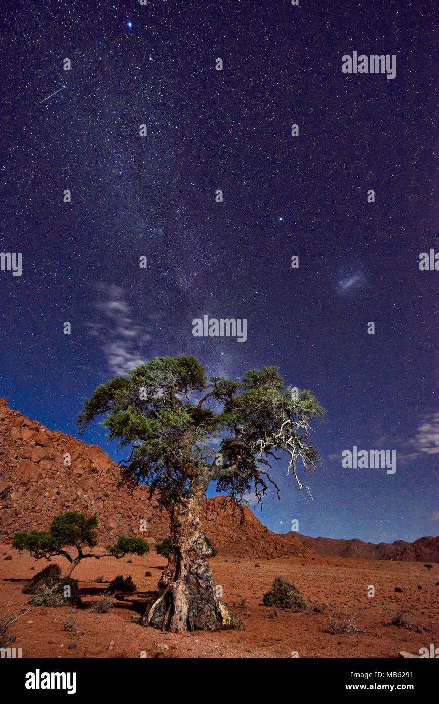 night shot of a tree with moonlight under sky with stars in tranquil landscape on Farm Namtib, Tiras mountains, Namibia, Africa - Stock Image
