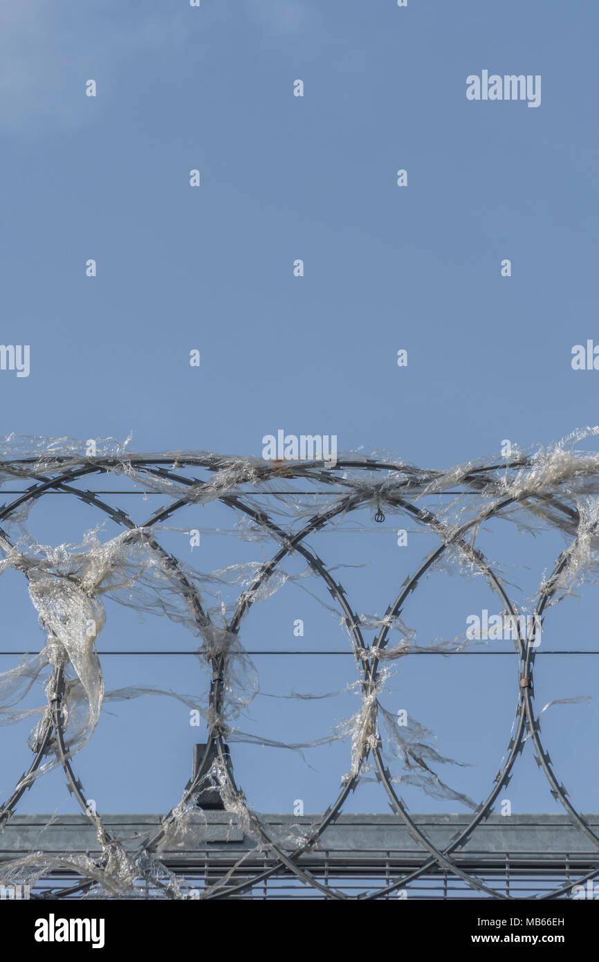 Coiled razor wire upon which plastic wrapping has become ensnared. Metaphor for 'war on plastic', ban plastic. - Stock Image